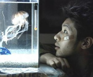 Jelly Fish de Kiyoshi Kurosawa